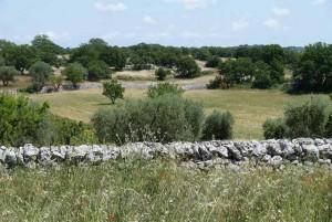 Landscape near Casa Rebecca