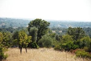 Landscape in Puglia