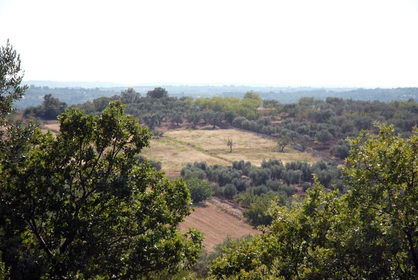 Project-Building-Plot-for-Sale-in-Puglia