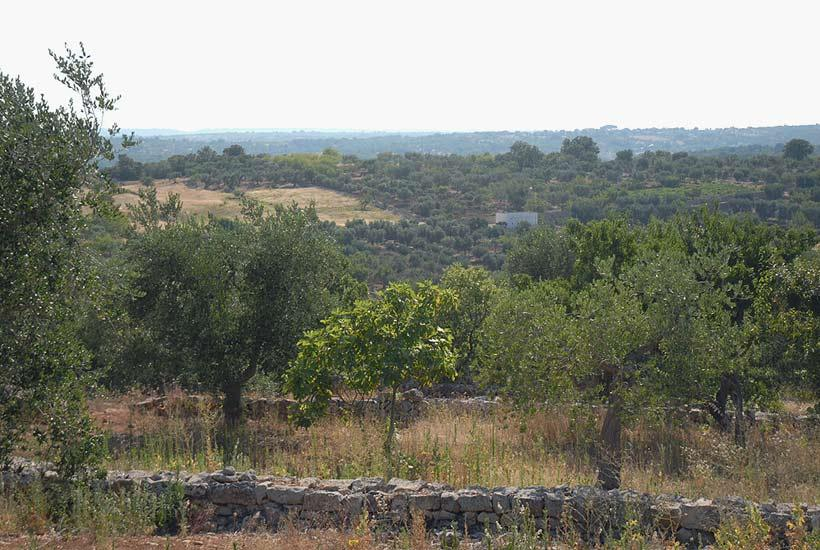 Land around Casa Aroma, new build house in Puglia