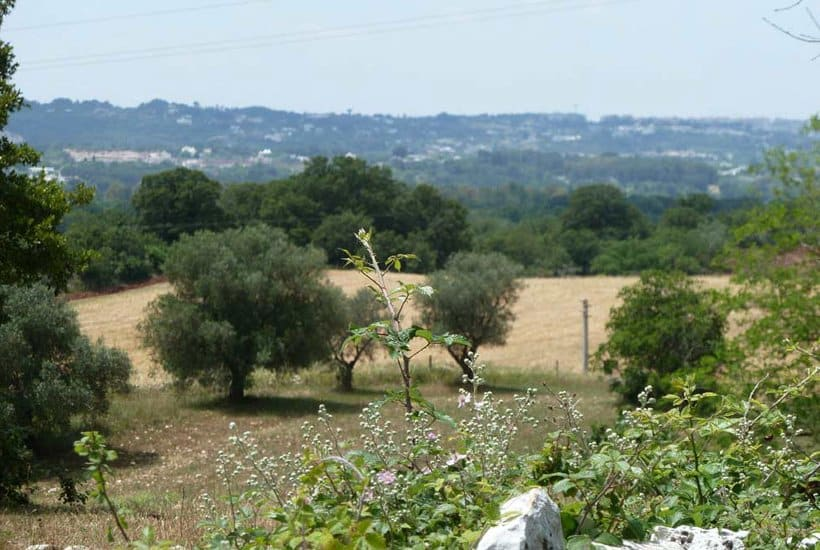 Land around Villa Corte Alta in Puglia