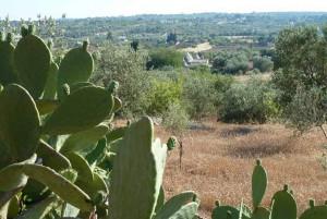 Land near Ostuni, in Valle d'Itria