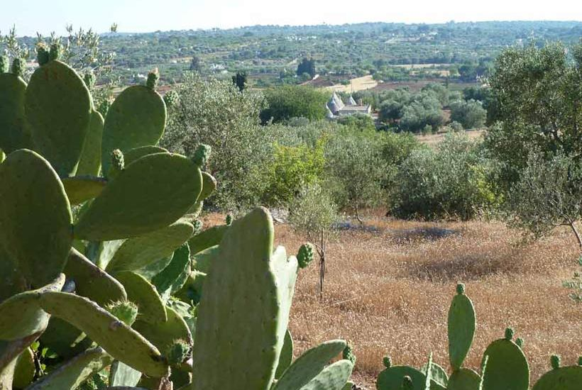 Land near Ostuni, in Valle d'Itria