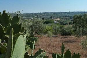 Landscape near Casa Torres