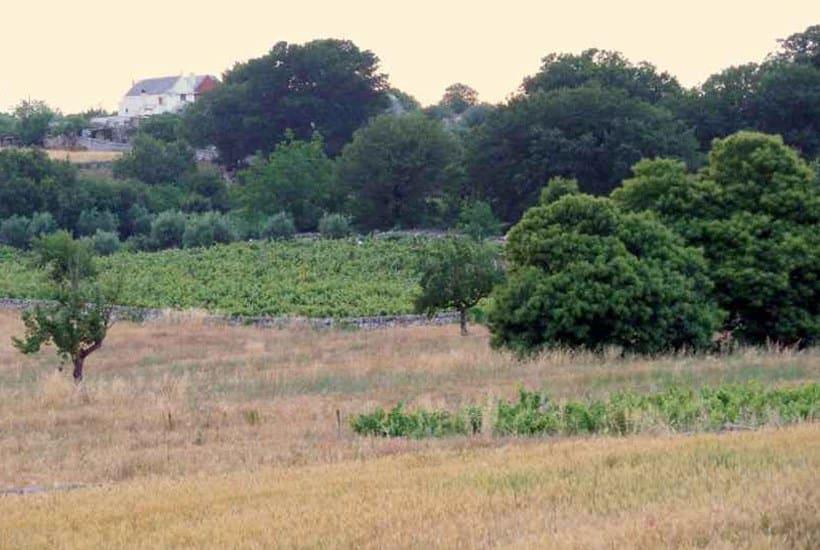 Land around Tenuta Silente in Puglia