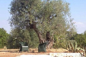 House in Puglia sorrounded by old olive trees
