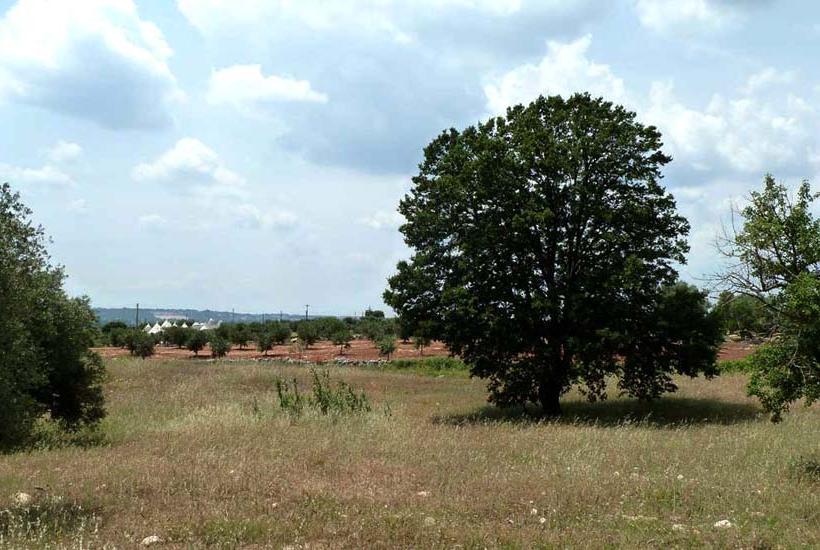 Landscape near Trullo Fedele in Puglia