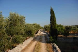 homes for sale in the Puglian countryside